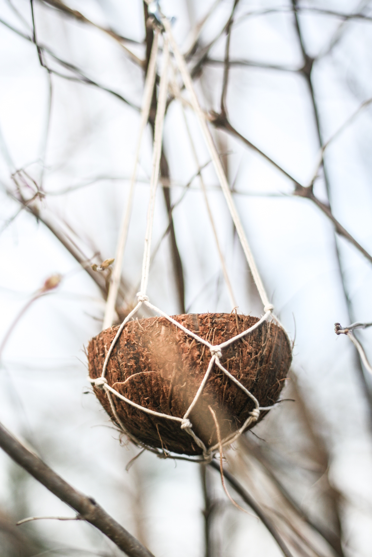 macrame coconut bird feeder
