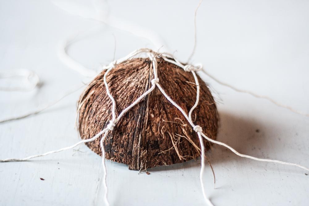 coconut nest-11