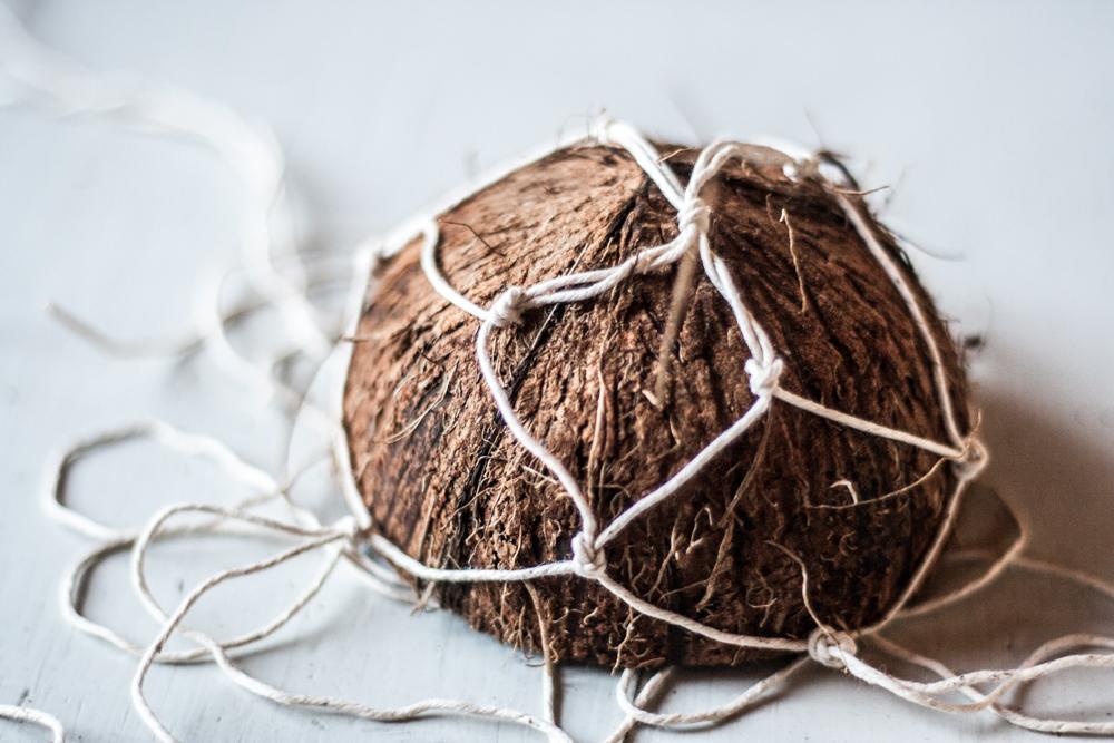 coconut nest-13
