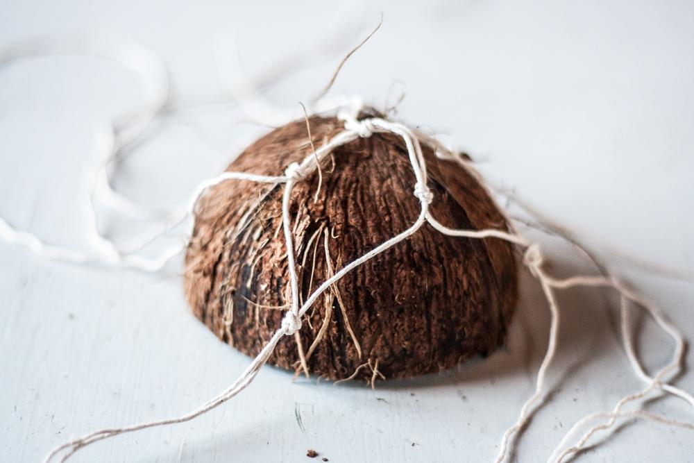 coconut nest-9